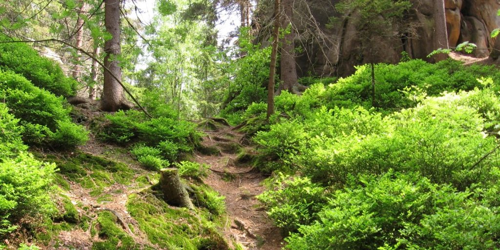 Ždánický les - mechy