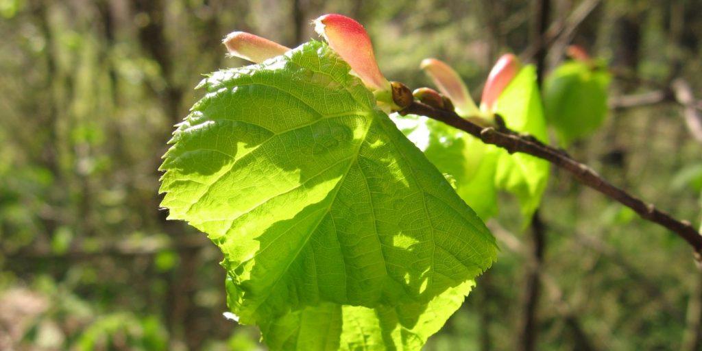 Ždánický les - listnatý les